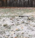 Snow Surprises Butler Co. Residents Early Friday